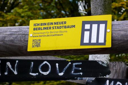Berlin_BAum (1 von 1)